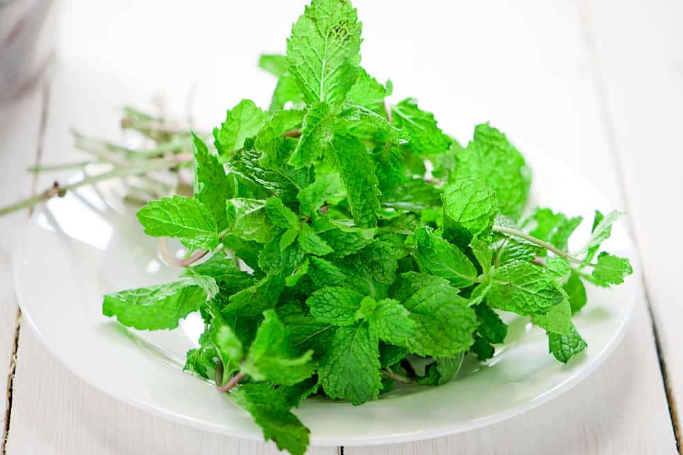 how to store fresh mint and other fresh herbs chefjar. Black Bedroom Furniture Sets. Home Design Ideas